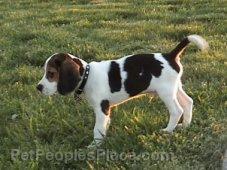 Dog Breed Profiles